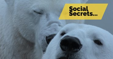 social secrets for branding and business building